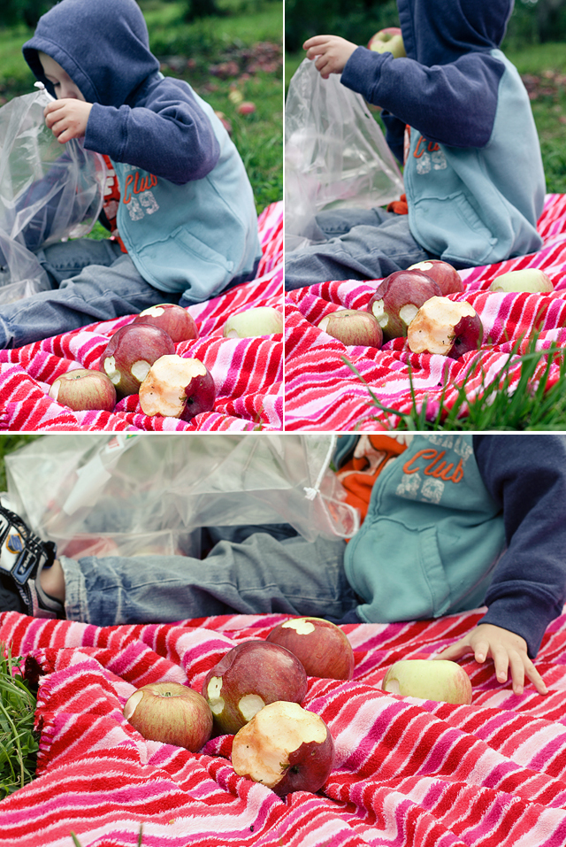 ApplePicking2011-Collage03