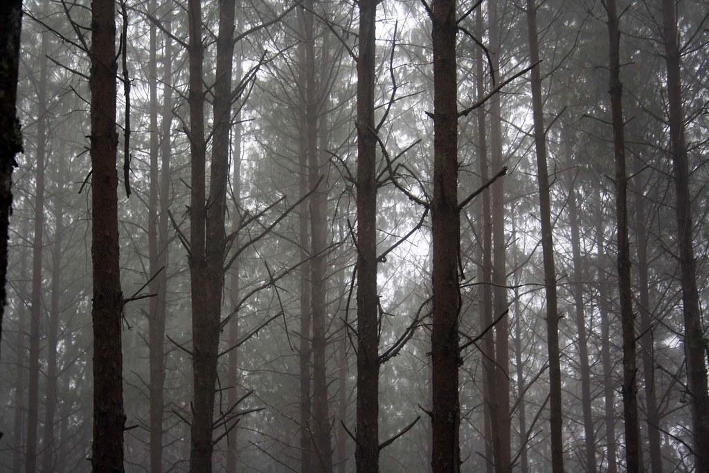 Bosque de pino encino yahoo dating