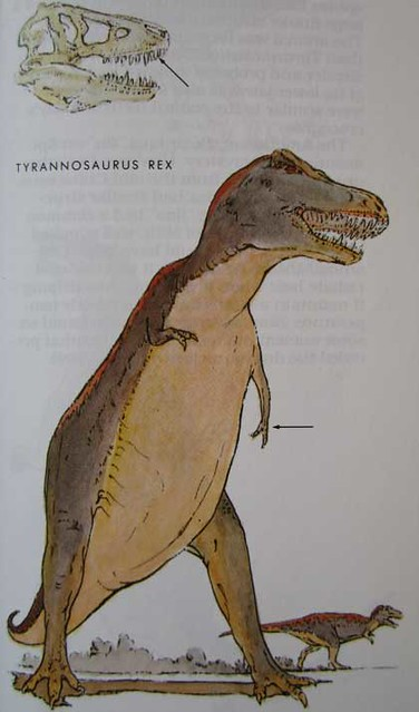 Peterson First Guides: Dinosaurs p. 39