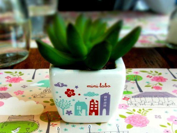 ミニラボカフェのミニグリーン