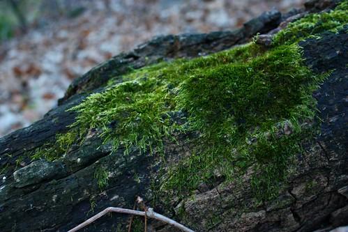 Circular Moss