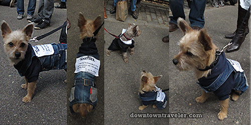 Tompkins Park Halloween Dog Parade_Occupy Wall Street dog costumes