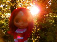 Sunlit Backdrop