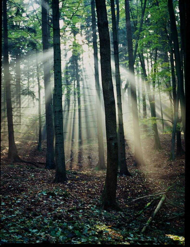 M64502 Janovky - les se světlem