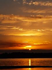 El Dorado (laica2) Tags: naturaleza sol canon atardecer sevilla andalucía agua ocaso dehesadeabajo puesadesol ltytrx5 1000d laica2 aznacázar