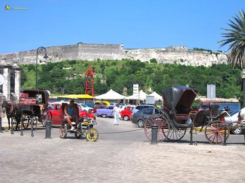 horse carriages havana vieja cuba