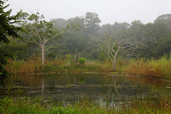 Guatemala - La Selva / Forest (Galeon Fotografia) Tags: naturaleza nature rainforest guatemala natur selva bosque skog bos wald floresta woud regenwald   forst regenwoud selvatropical kalikasan pluviselva msitu florestahmida  forestapluvial fortquatoriale forttropiale
