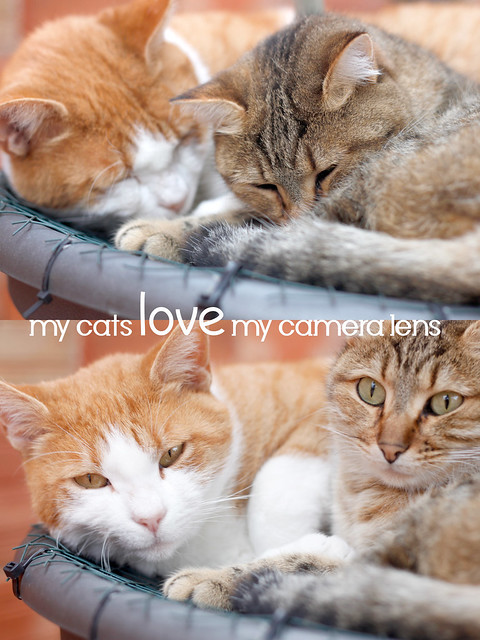 My cats love my camera lens!