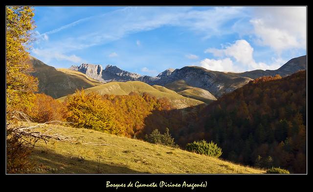 Bosques de Gamueta (Pirineo Aragonés)