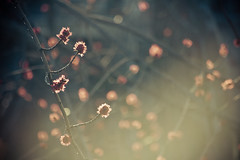Light (Cyrielle Beaubois) Tags: light tree nature canon photo montral branches arbres sigma1770mm f2845 eos400d sigma1770mmf2845dcmacro dcmacro cyriellebeaubois cyriellebeaubois