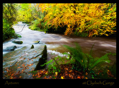 Autumn at The Gorge (GaryHowells) Tags: autumn wales clydachgorge