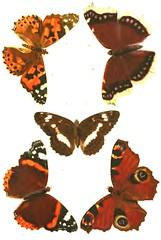 5butterflies2