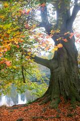 10Nov2011_2968 (Ivan-IDPhotos) Tags: autumn virginiawater