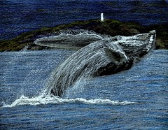 Whale Play (traqair57) Tags: lighthouse art drawing wildlife artists whale whales crayons  stushie