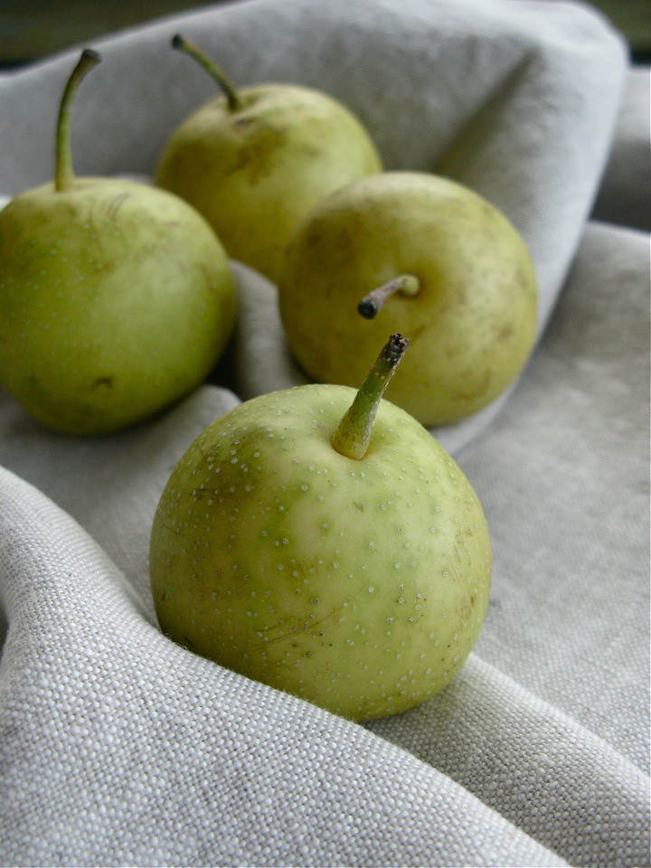 autumn pear varieties 003