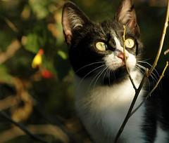Happy Birthday Paulina! (mara zocolotte) Tags: cats sun sunlight nature look brasil cat eyes natureza gatos curitiba happybirthday myeyes olhares littlecat mygearandme mygearandmepremium artistoftheyearlevel2