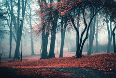 embers (ewitsoe) Tags: park morning autumn winter mist cold color fall leaves fog 35mm nikon europe seasons foggy poland verycold poznan d80 swarzedz