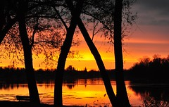 PUBLISHED IN THE MANITOBA CO-OPERATOR (Jeannette Greaves) Tags: sunset reflection water island flickr explore 2011 portagelaprairie manitobacooperator jpubpic