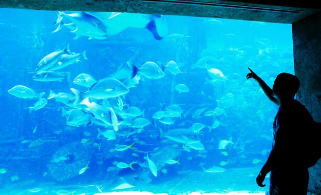 atlantis aquarium-5