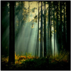 A Forest (pixel_unikat) Tags: light sun tree forest austria