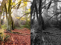 Transformation (louisberk) Tags: leica wood autumn trees light sunlight white black colour london leaves diptych branches heath m8 hampstead 35 luminescence motes summarit gupr