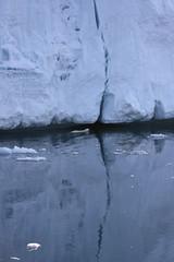 IMG_7488 (Jenny Varley) Tags: bear swimming svalbard polar nordaustlandet austfonna