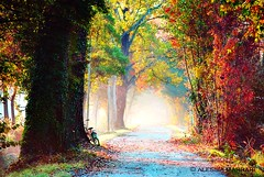 Down here on magic street (Alessia Marrari) Tags: morning autumn trees nature colors beautiful landscape path magic dream friuli