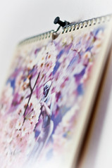 Pin up (glukorizon) Tags: white metal wall paper spiral pin calendar pastel wand elf fairy kalender papier wit thumbtack spiraal metaal muur pushpin fantasie odc spiralbound punaise phantasy odc2 ourdailychallenge attachmentsandconnections spiraalgebonden