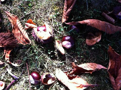 Autumn in Gascony