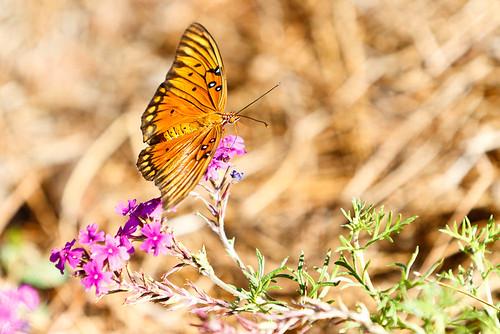 Hodges Garden - Moth