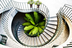 """Make Your Way to Greenery (""""Soup"""") Tags: sanfrancisco california city plant fern nature architecture mall downtown north steps round swirl"""
