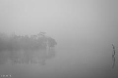 Separated (stalin.sm) Tags: mist kerala wayanad mistymorning vythri padinjarathara