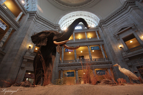 Mueseum of Natural History