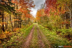 Autumn Road (Matt Dobson Photograhy) Tags: road autumn trees red orange plants canada colour green fall nature beautiful grass leaves yellow contrast season landscape outdoors island countryside leaf time path year prince autumnleaves edward dirt changing northamerica princeedwardisland geography pei hdr 2011 goldenleaves flowerstrees imagestyles imagedescriptives locationstravel specificlocations
