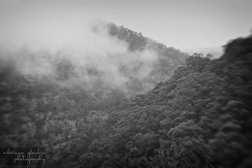 mist & fog in springtime_10