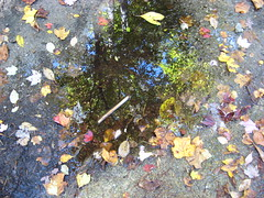 Reflection in a puddle Photo