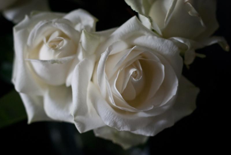 Wonderful flowers! DSC_8169