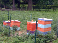 Woodlands Community Apiary