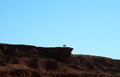 Lone Rider (andrewrosspoetry) Tags: horse navajo monumentvalley johnwaynepoint
