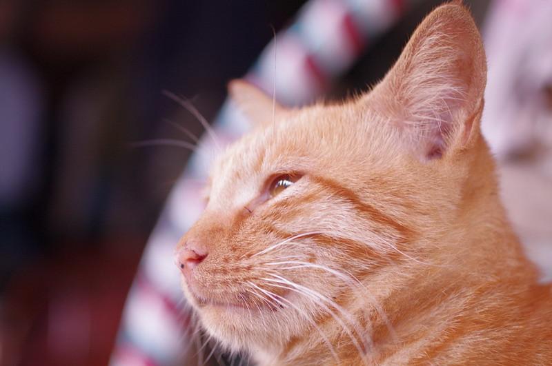 貓眼~~~