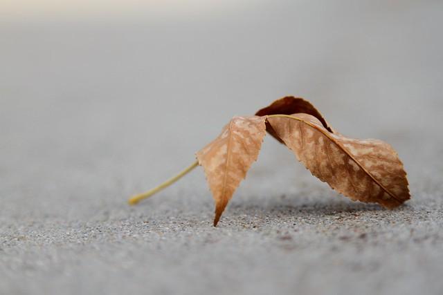 9848 crunchy leaves