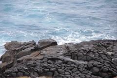 blowhole Cape Bridgewater_5407 (gervo1865_2 - LJ Gervasoni) Tags: ocean water coast october waves australia victoria erosion formation coastal blowhole cape coastline geology basalt bridgewater geological 2011 photographerljgervasoni