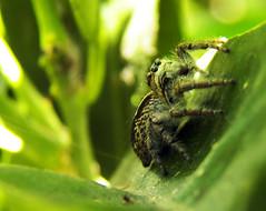 la arañita (Simplemente lo que ves) Tags: araña