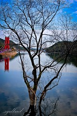 The Tree Above The Water (sydbad) Tags: canon is l usm southkorea ef f4 24105mm eos60d thetreeabovethewater