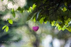 "186/365 ""If you want peace & joy, forget about earthly honors & make efforts to please the HEARTS.""   Mawlana Jalal-al-Din Rumi (Humayunn Niaz Ahmed Peerzaada) Tags: charity india tree green love leaves hearts goodness model photographer dof heart bokeh quote availablelight top muslim christian tolerance quotes poet jew actor maharashtra iranian 365 mumbai maulana mystic philosopher anatolia rumi efforts humayun mevlana d90 molana molavi happydiwali project365 photography availablenaturallight kingofbokeh peerzada nikond90 mowlana ourmaster iranianpoet humayunn peerzaada mowlavi humayoon balkhi wwwhumayooncom humayunnapeerzaada photographytable nikon135mmf2dc nikond90clubasia humayunnnapeezaada mawlanajalalaldinrumiquotesonbokeh mawlanajalalaldinrumiquotes mawlanajalalaldinrumi maulanajalalaldinmuhammadrumi mevlanajalalaldinrumi iraniangreatpoet mevlanajalaluddinmohammadrumi thelandofrum positivereasoning awarenessthroughlove hazratshamstabriziar celaleddinmevlana humayunnniazahmedpeerzaadafood 365project365365seasoni humayunnpeerzaadaphotographyhumayunnniazahmedpeerzaadaphotography"