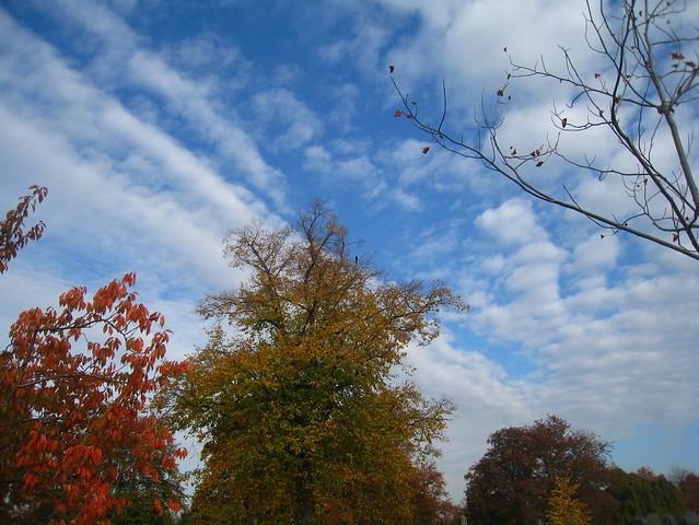 Herfstkleuren, stadsbegraafplaats Leuven