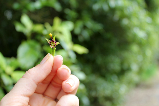 Cute tiny flower