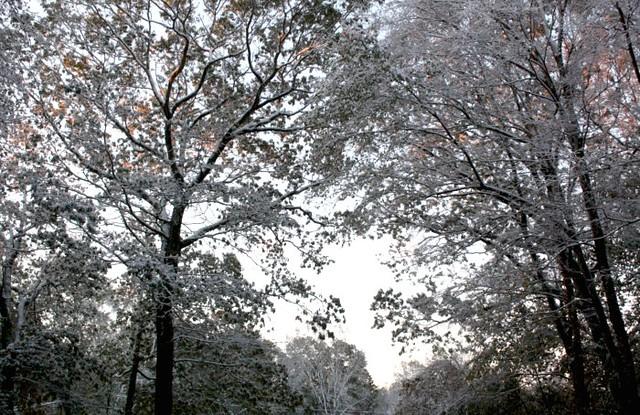 Autumn 2011 037