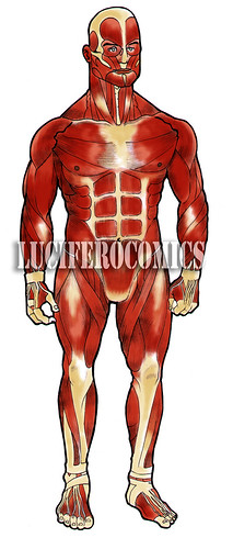 sistema muscolare blog