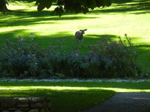 Lithia Park, Ashland, Oregon _ 6168